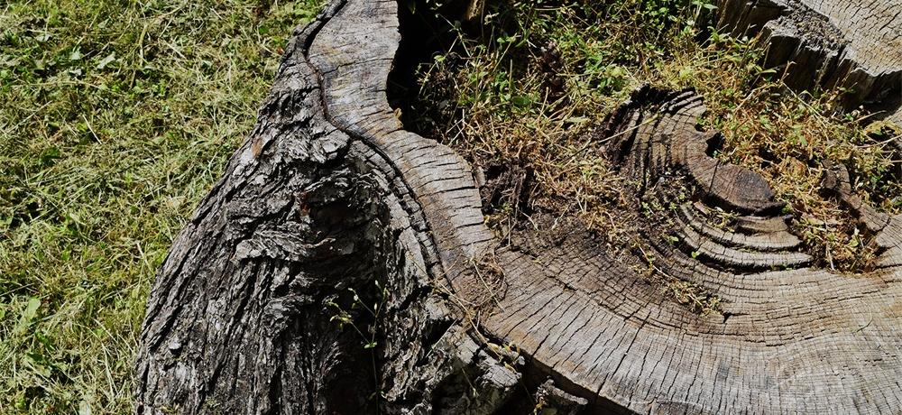 木や環境へ配慮した仕組み
